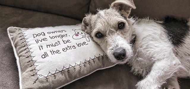 un chien allongé sur le canapé