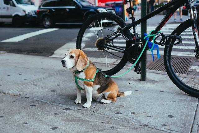 chien prêt à courir à côté d'un vélo