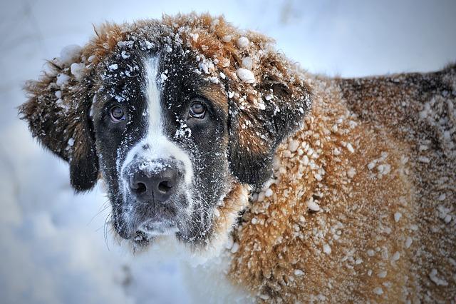 chien sous la neige en hiver