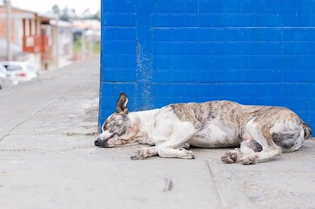 chien malade dans la rue