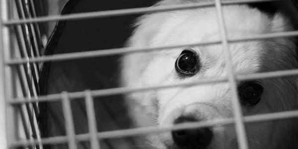 chiot dans une cage