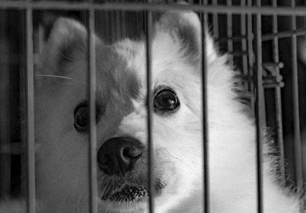 chiot triste dans sa cage de dressage