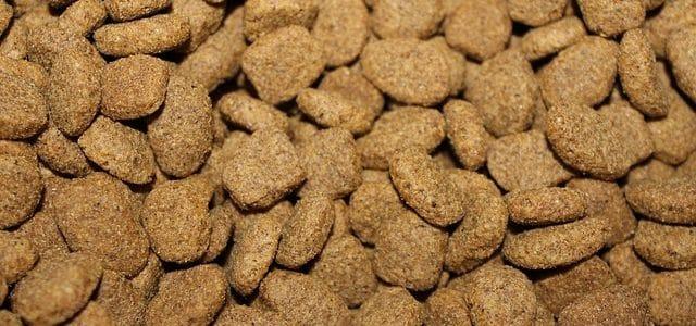 des croquettes chien bien conservées