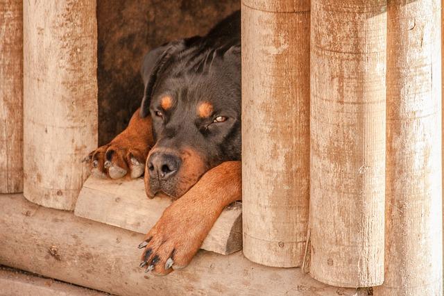 un chien dans une niche chaude