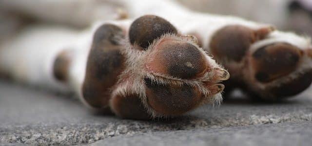 les pattes d'un chien mort