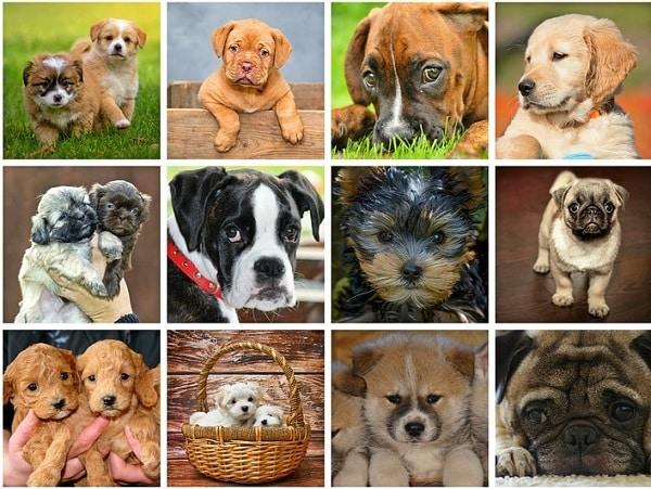 Transport Chien Voiture - 10 astuces à connaître - Education canine - Pourquoi et comment ?