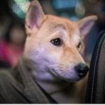 chien dans son sac de transport