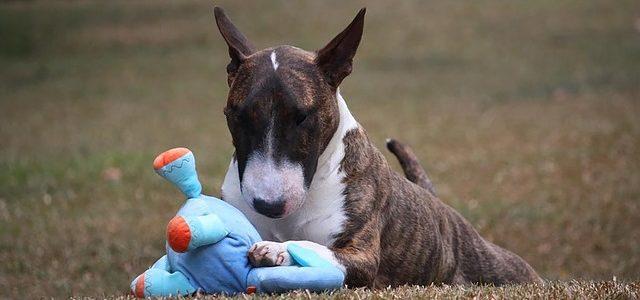 chien dans son jardin