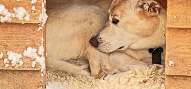 chien allongé dans sa niche