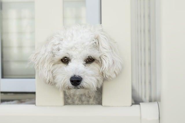 chien seul sur le balcon