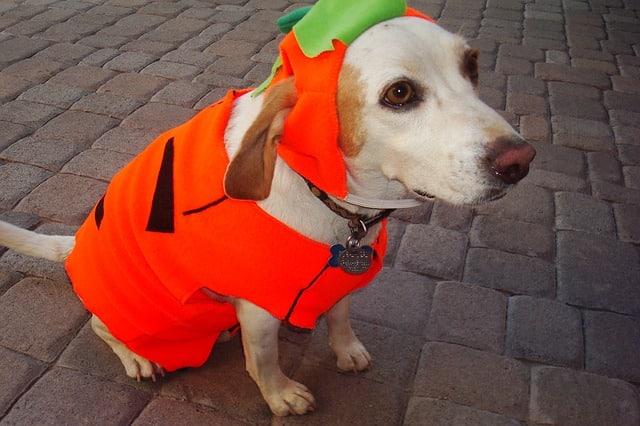 chien dans un costume