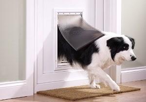 chatiere pour chien