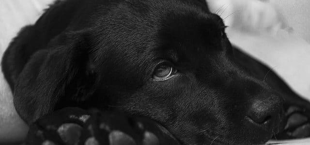 un chien malade