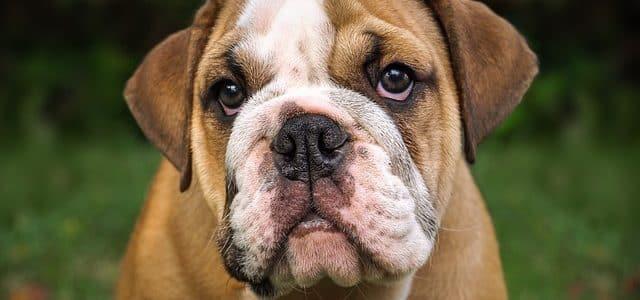 le chien et la trisomie