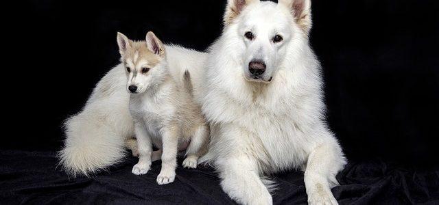 une chienne avec ses chiots
