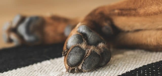 pattes de chien qui grattent