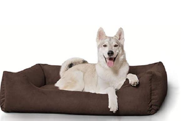 panier pour grand chien