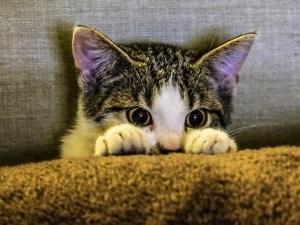 un chat apeuré qui se cache
