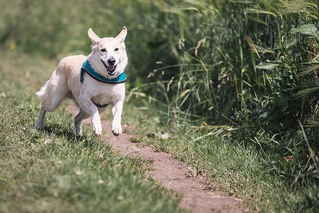chien qui court vite
