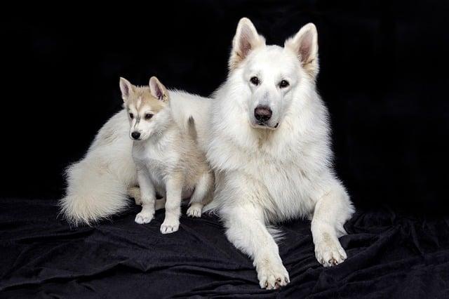 chienne avec son chiot
