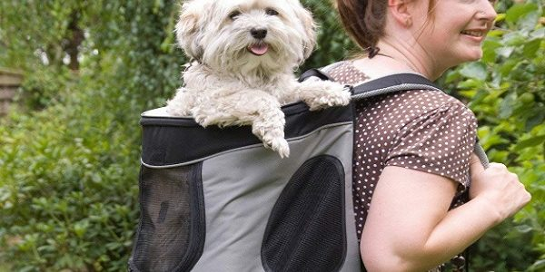 sac à dos pour chien