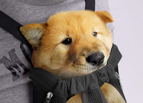 sac ventral chien