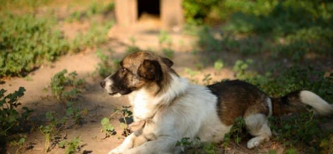 chien dans le jardin