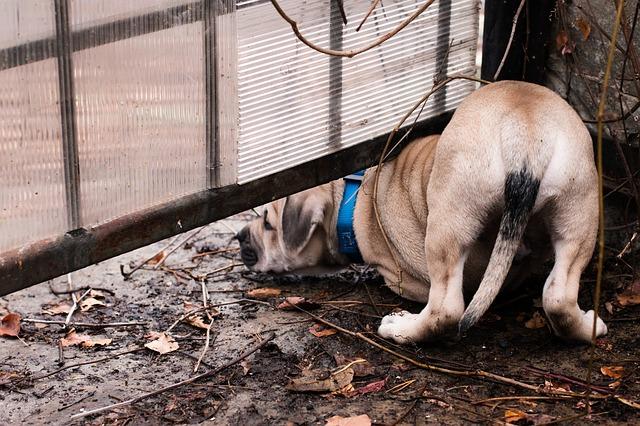 chien qui essaie de passer sous une barrière