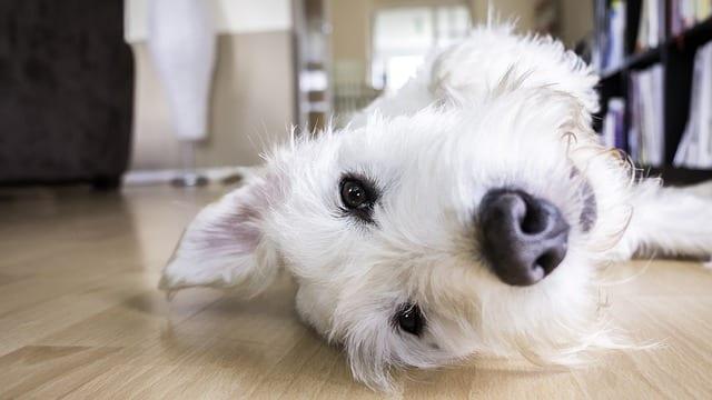 chien gardé par un pet sitter