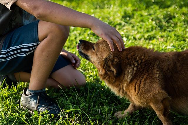 étudiant pet sitter avec chien