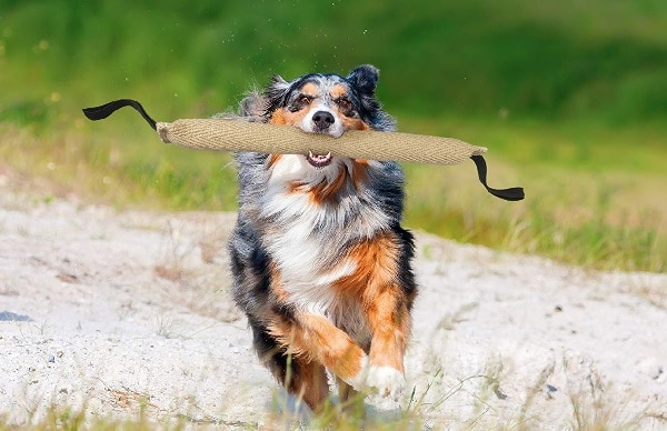 meilleur boudin rappel chien