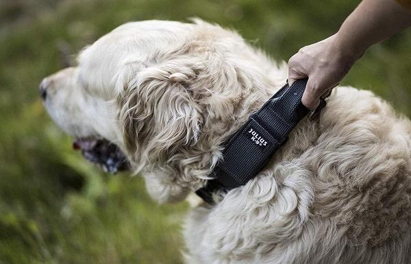 meilleur collier julius chien