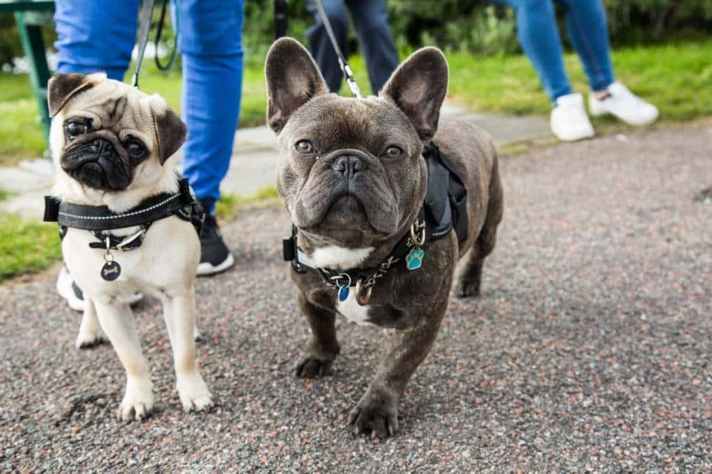 chiens avec un collier