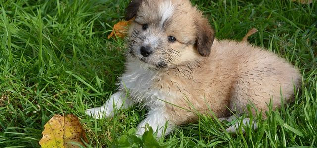 petit chien mange herbe