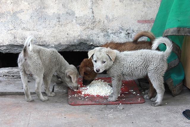 chien qui mange du riz
