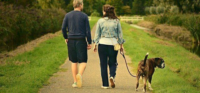 chien qui se promène avec ses maîtres