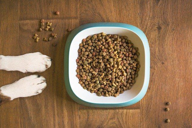 chien qui mange pas ses croquettes