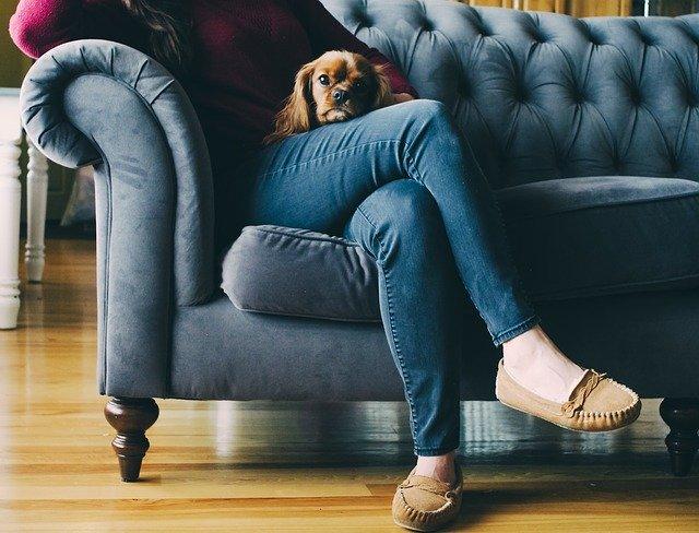 chien sur les jambes de sa maîtresse