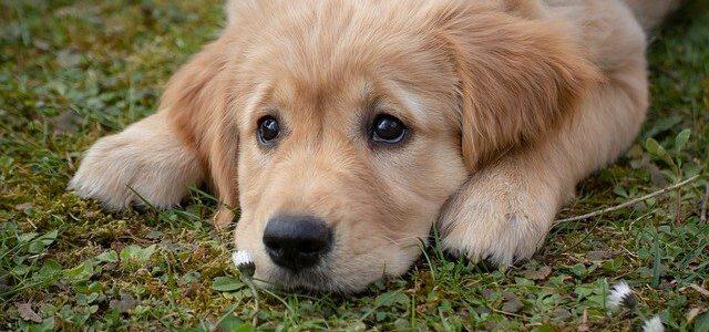 chien allongé au sol