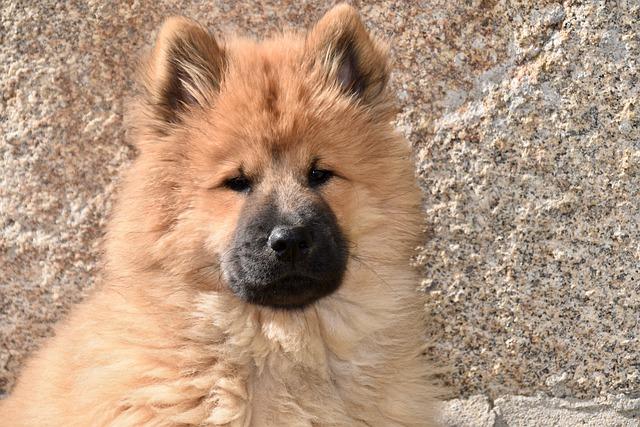 chien au beau poil