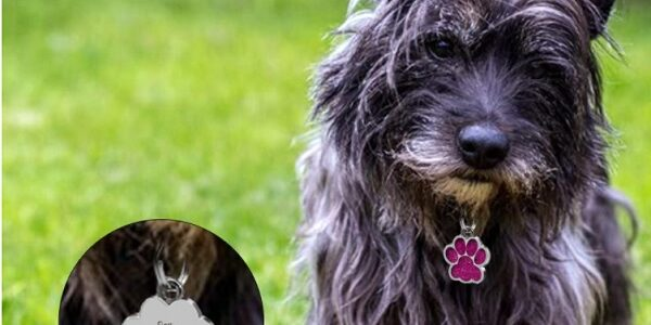 médaille d'identification pour chien