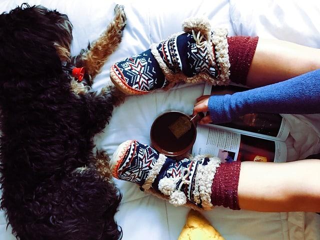 chien à côté de chaussettes