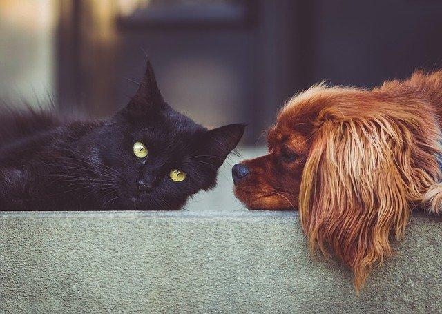 chien devant un chat noir